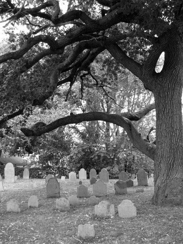 old burying cemetery tree